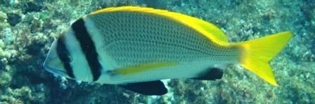 Marsa Alam excursions: snorkeling tour to Sharm El Luli Bay