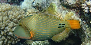 From El Quseir snorkeling tour from Port Ghalib in Marsa Alam