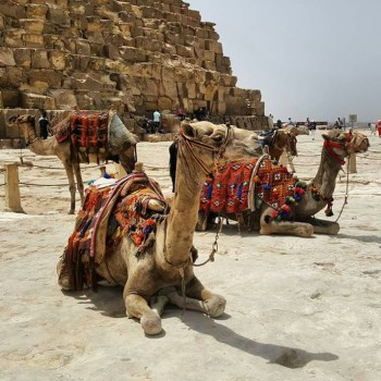 Private 2 day trip to Cairo by plane from Makadi bay