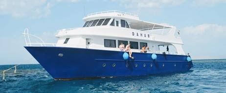 Soma Bay & Safaga:  Delphine Tour, Private Schnorcheltour