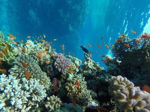 Sindbad U-Boot Ausflug ab Makadi bay sahl Hasheesh