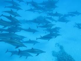El Quseir Schnorchelausflug zur Delfin Haus-Sataya Insel