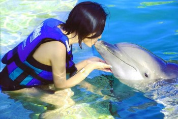 dolphin Show, delfinarium Hurghada