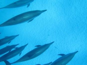 Schnorchelausflug zum Delfin-haus, Sataya Insel