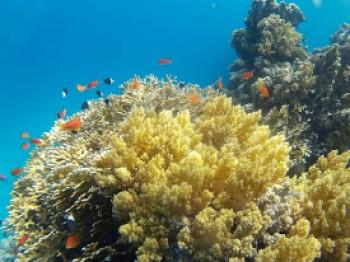 Schnorchelausflug zur Sharm El Naga Bucht